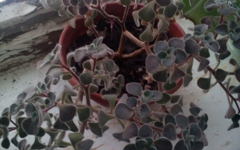 зеленое растение без цветков