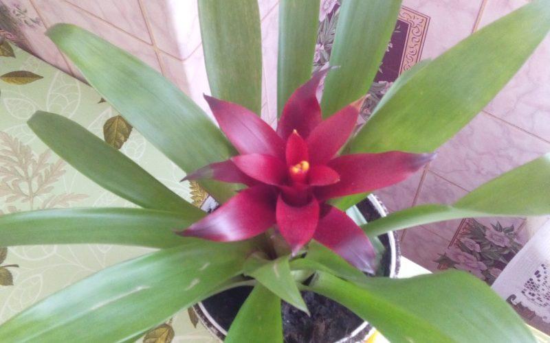 Зеленое растение с одним розовым цветком