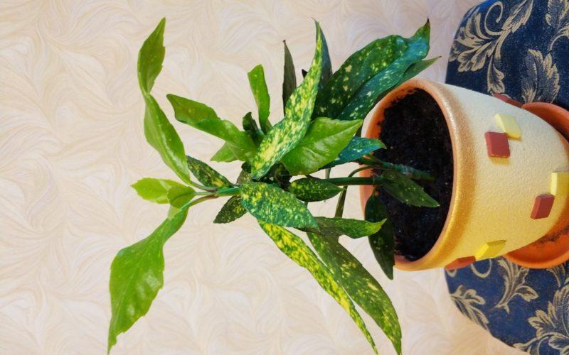 Подскажите название растения.