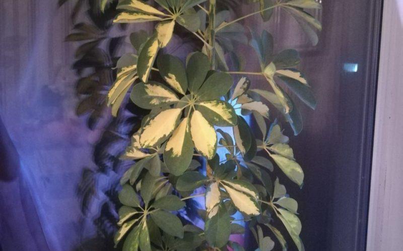 Зеленый ствол лисьтья тонкие