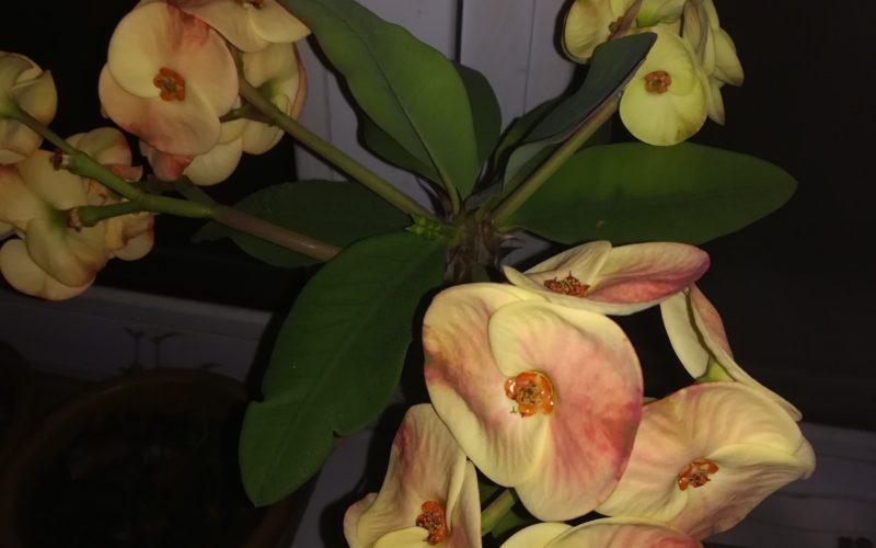 Цветок постоянно цветёт