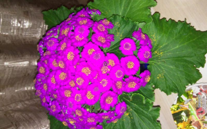 Цветок с сиреневыми цветами