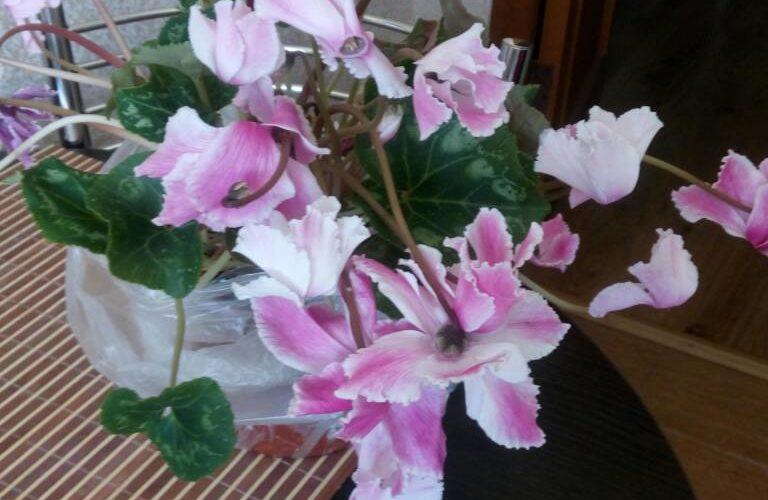 хочу узнать название цветка