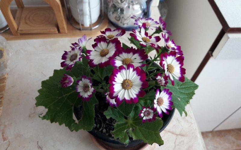 Название цветка