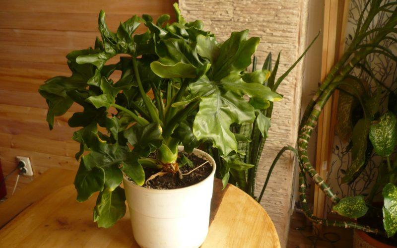 зеленое растение с гнутыми листьями