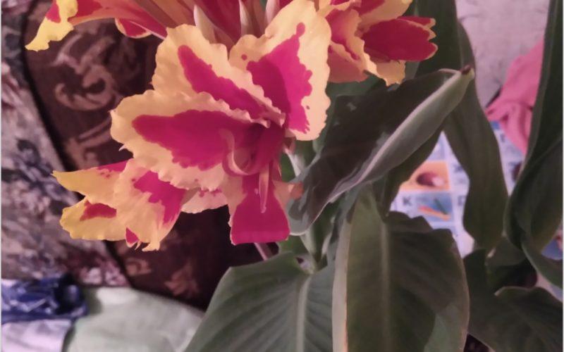 Название цветка?