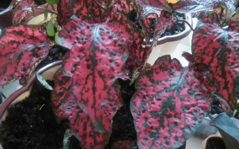 Зеленое растение с красными листьями