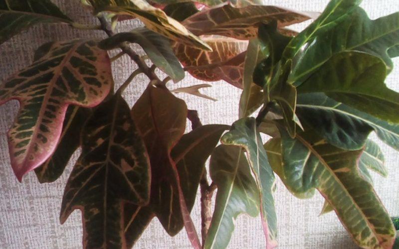 Зеленое растение с интересными листьями
