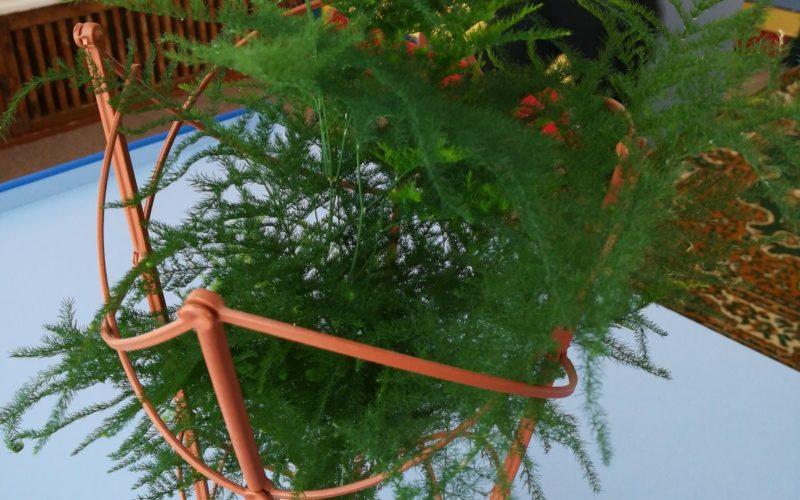 Растение с пушистой веточкой