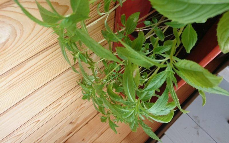 Зелёное растение, прямостоячее, распаде месяц