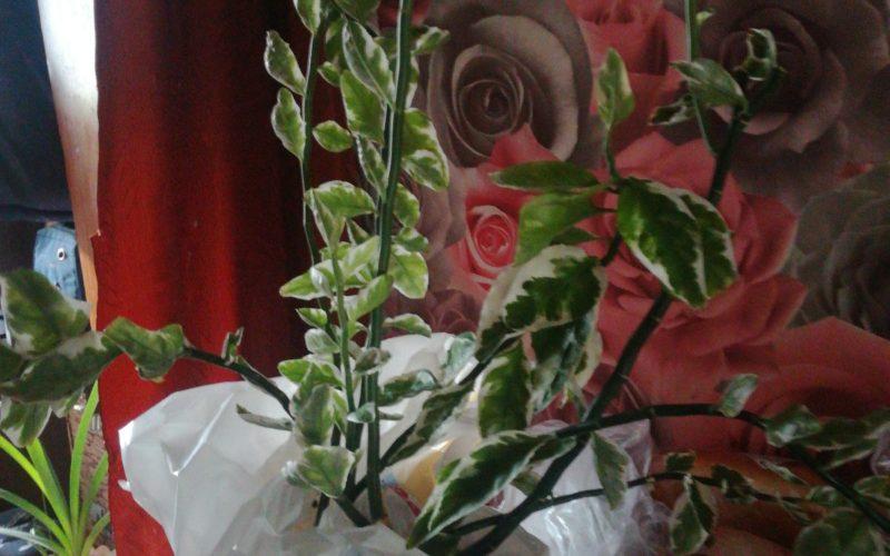 Зеленое с зелено белыми цветочками