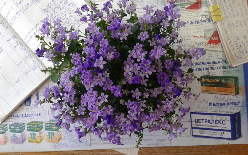 Помогите узнать что за цветы