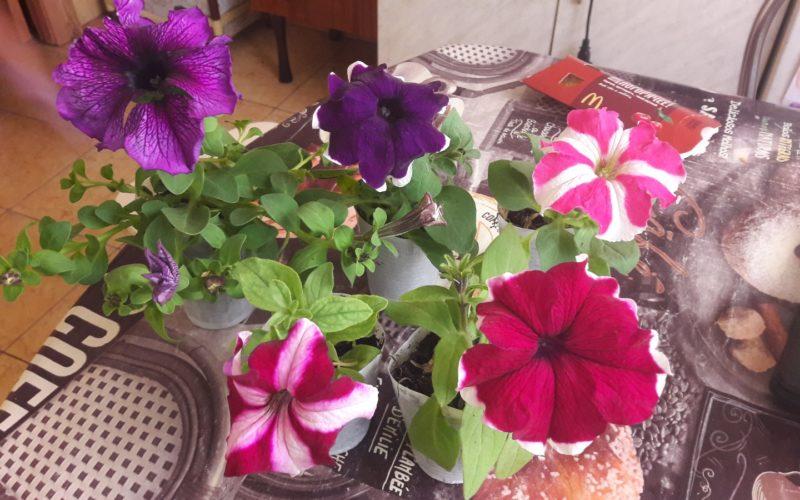 Зеленые растения с разноцветными цветами