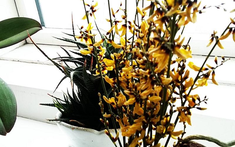 Голые веточки с желтыми цветами