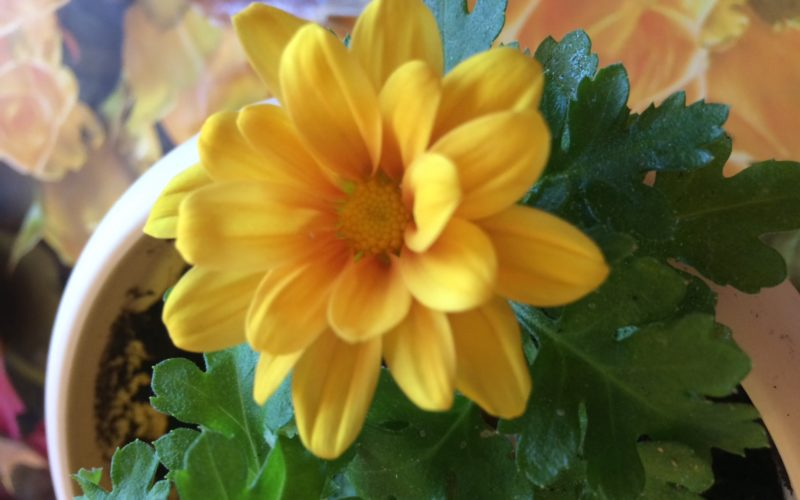 Зеленое растение с жёлтыми цветами
