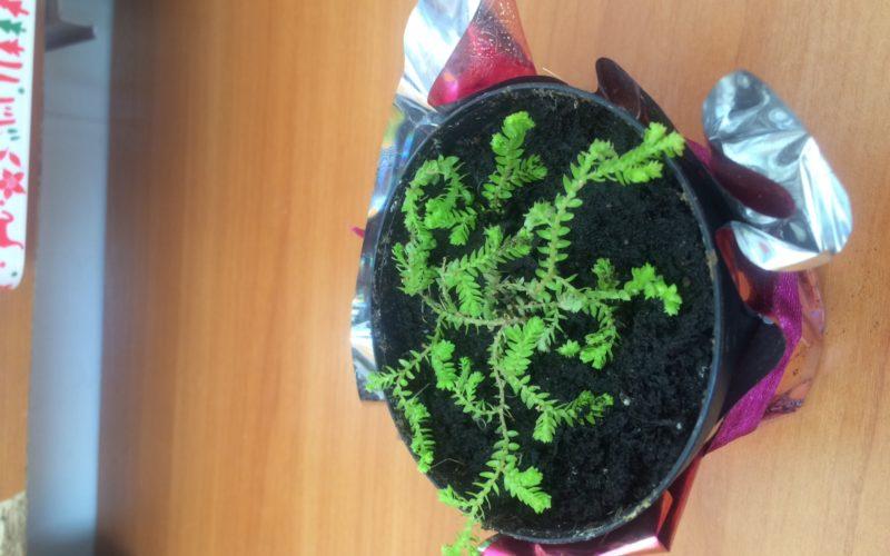 Зеленое растение похожее на папоротник