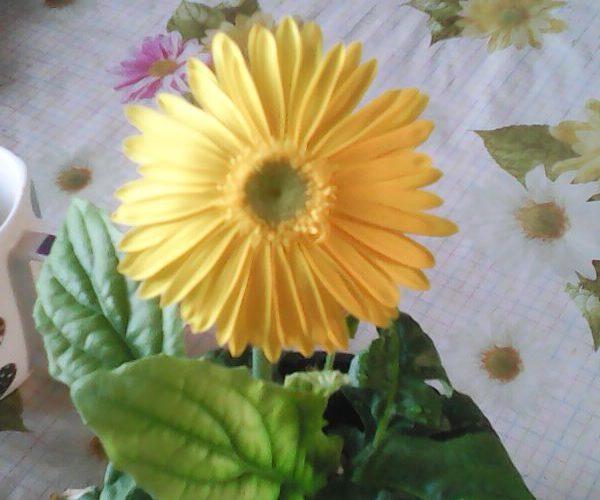 Растение с зелеными листьями и желтым цветком
