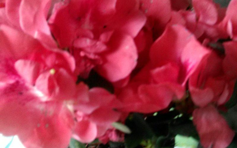 как называется цветок??