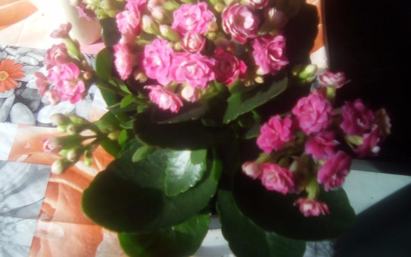 Цветок как букет