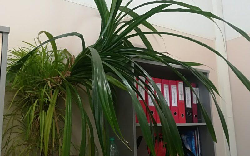 Зелёное растение с длинными листьями
