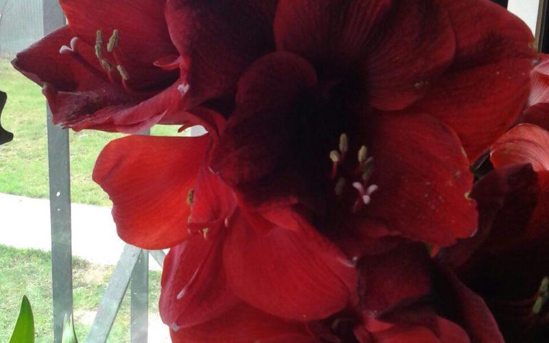 Подскажите пожалуйста как называется цветок?