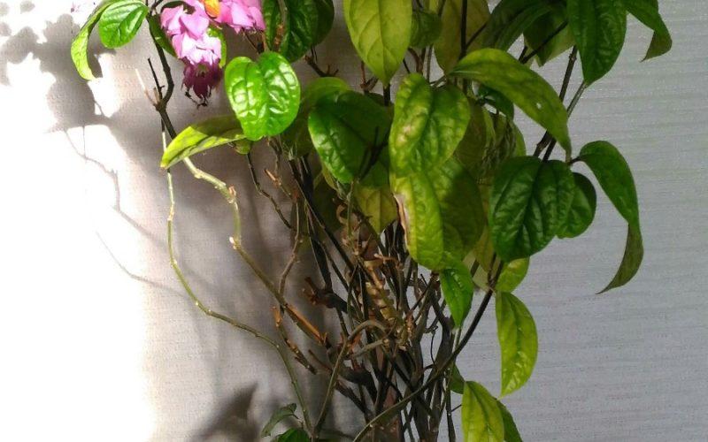 Зеленое деревце с бело-розовыми цветами