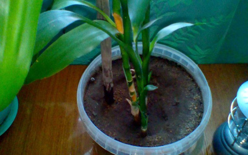 Как называется это растение