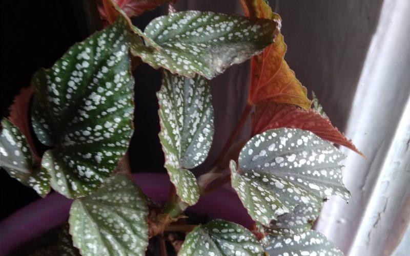 Зелёные листья с пятнами