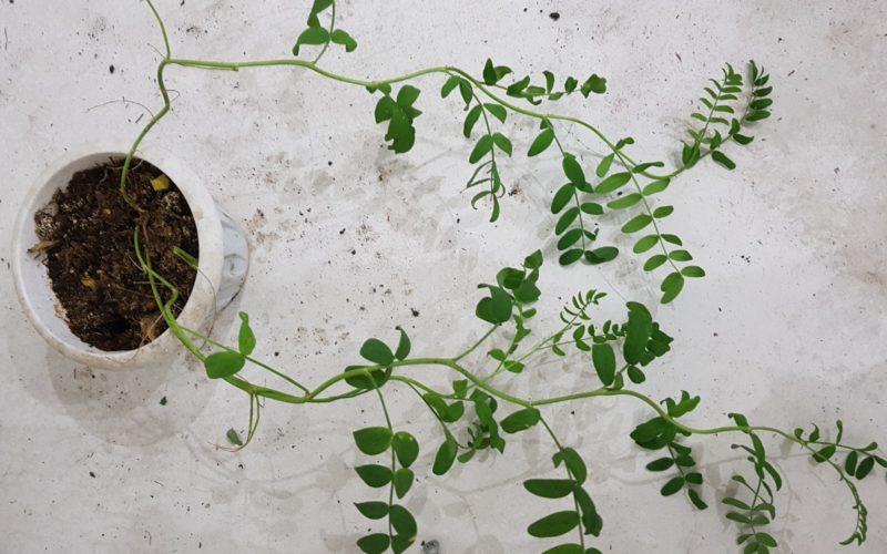 Какое это растение
