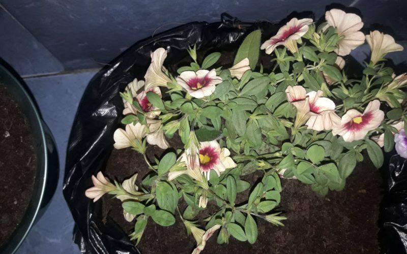 Зеленое растение с желто-красными цветами