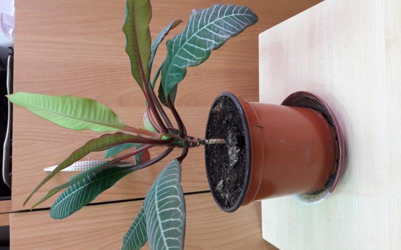 растение с зелеными листьями