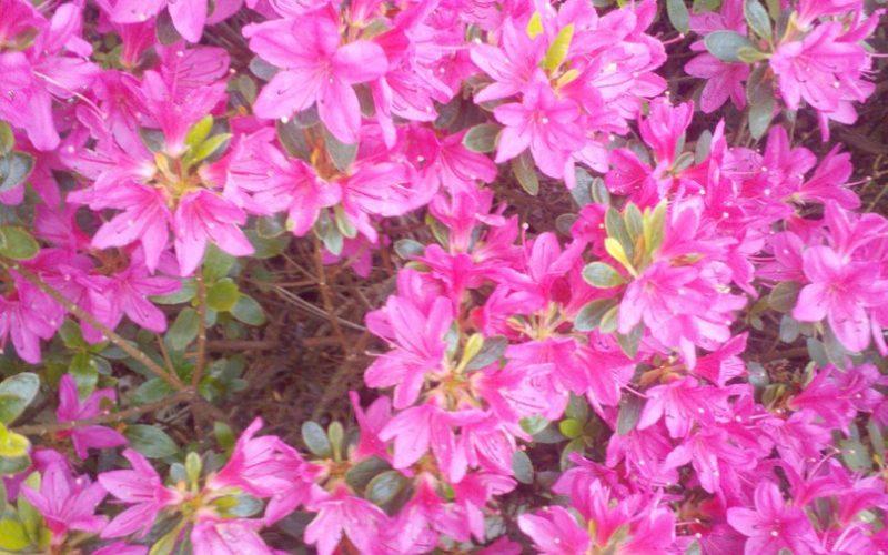 еленое растение с цветами