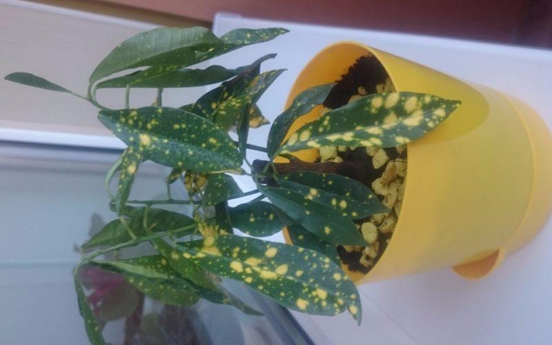 Зелёное листья с желтыми крапинками