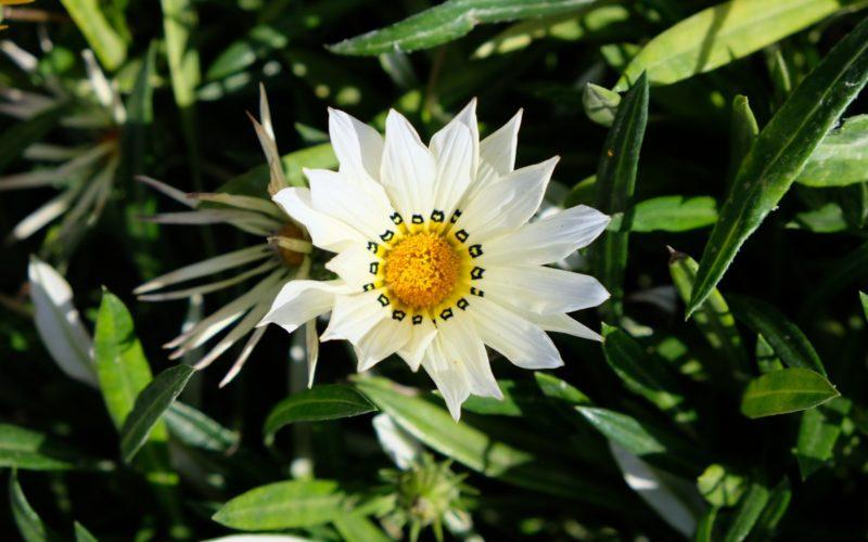 Белый цветок с необычной сердцевиной