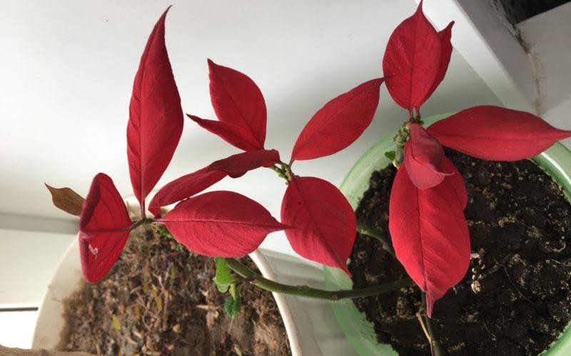 Помогите найти растение