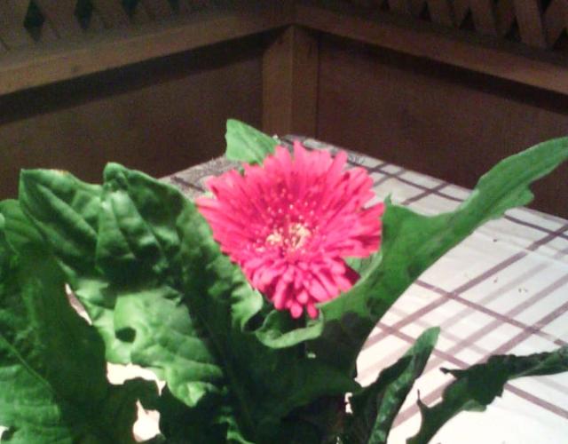 Зеленое растение с розовым цветком