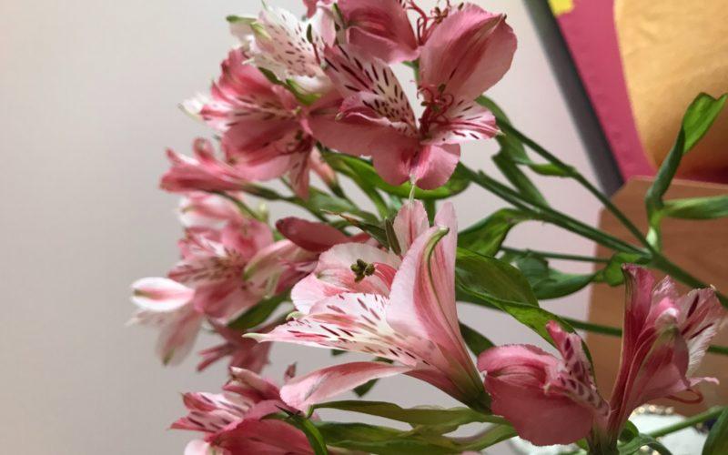 Подарили цветы, подскажите название, очень красивые