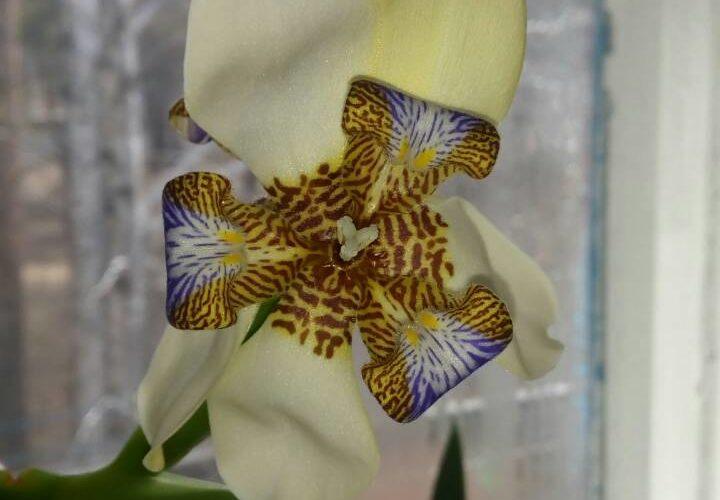 Зеленое растение с белым в крапинку цветком
