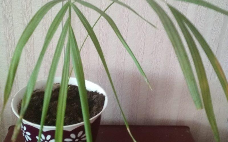 Помогите определить, что за растение!
