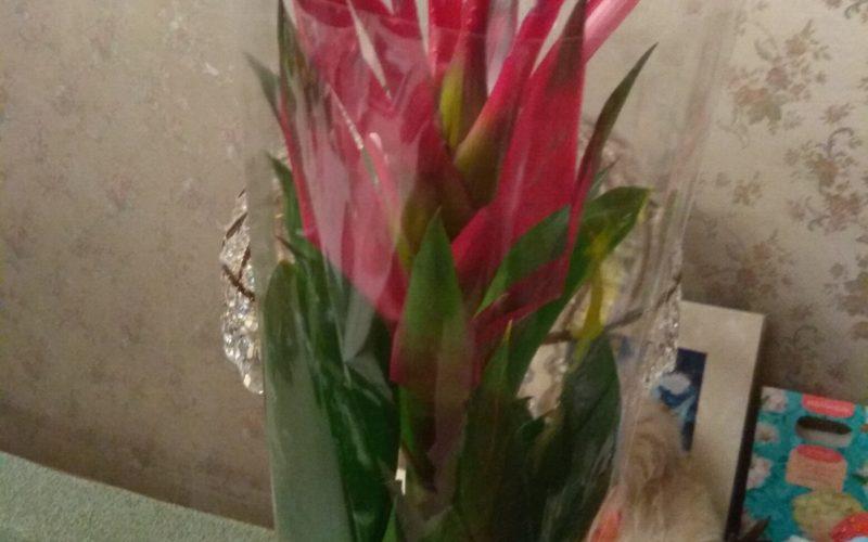 Зелёное растение с бардовыми цветами