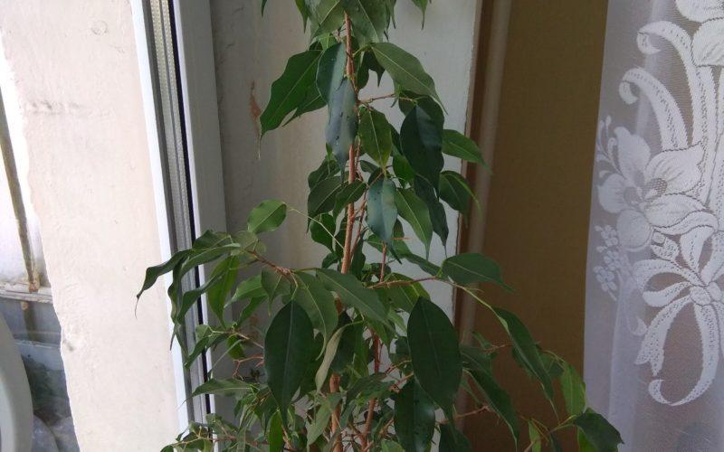 помогите опознать эти два растения