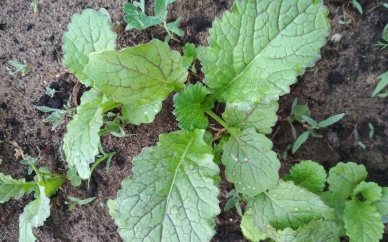 зеленое растение c прожилками фиолетового цвета