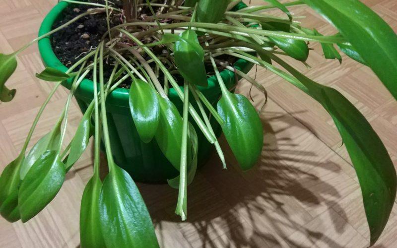 Растение с зелёным кустом