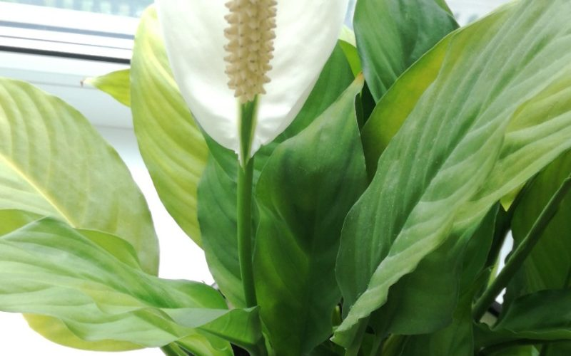 Зеленое растение с белым цветком