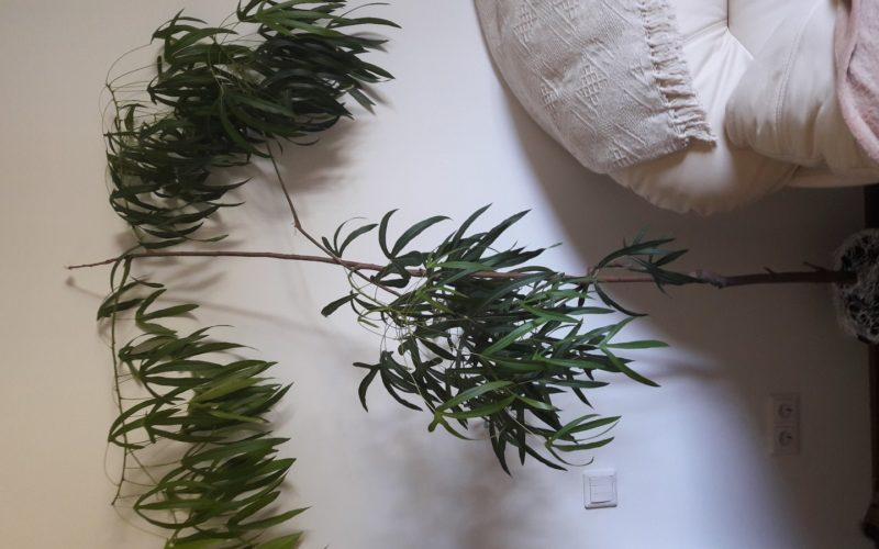 Высокое,тонкие ветки и листья