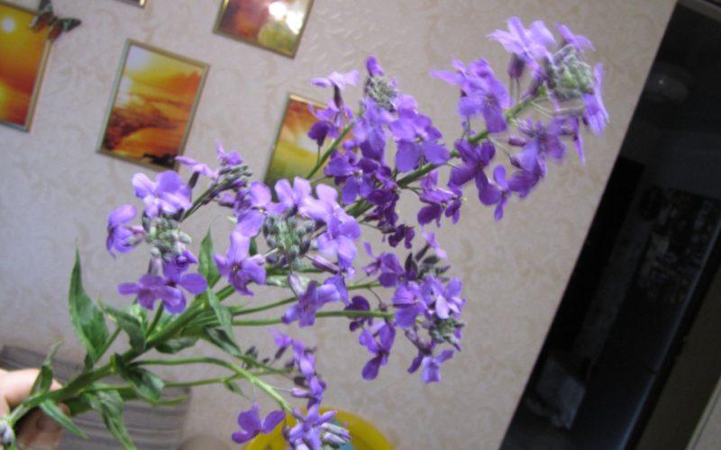 Дикий фиолетовый цветок. Кто он?