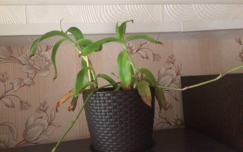 Подскажите что за растение?