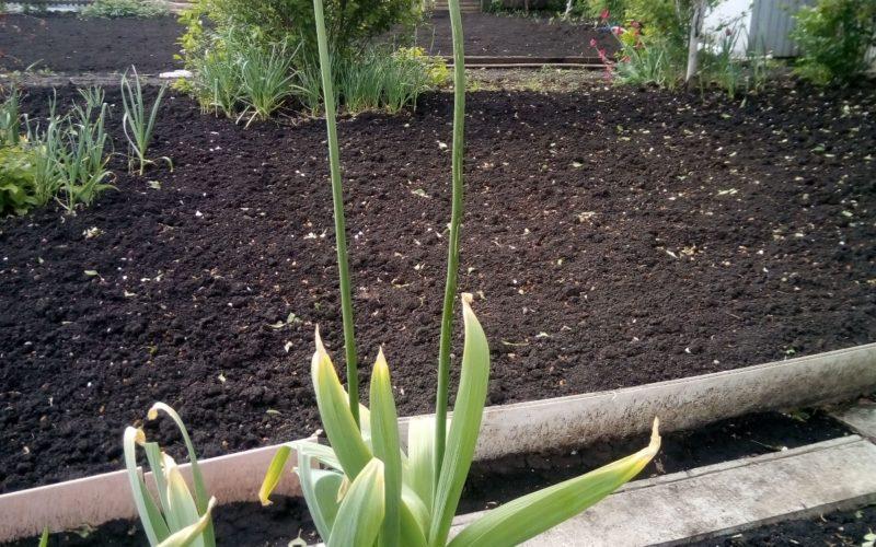 Зеленое растение с феолетывыми цветком