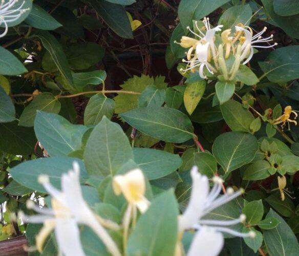 Очень вкусно пахнущие цветы