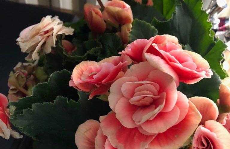 Очень красивый цветок. Подарили. Что это?